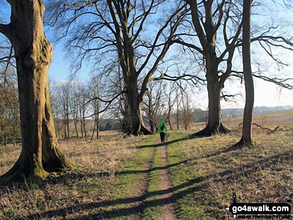 Walk ha123 Four Marks and Chawton Park Wood from Chawton - On The St Swithun's Way near Chawton