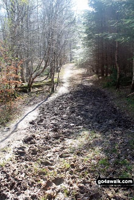 Woodland near Cheriton