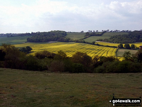 Rapeseed field from The Ridgeway on the top of Lodge Hill