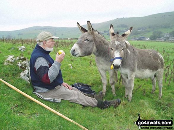 Donkeys on Hitter Hill