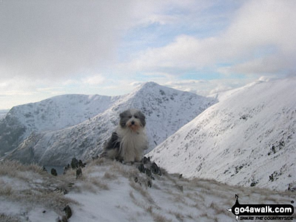 Skye (my fellow walker) on Bannerdale Crags in the snow. Walk route map c114 High Street from Mardale Head photo