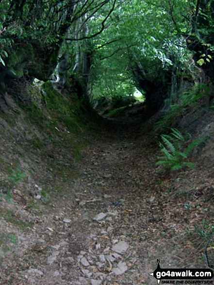 The enclosed sunken track between Haddon Farm and Bury. Walk route map so106 Haddon Hill and Wimbleball Lake from Bury photo