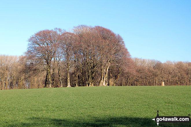 Cheesefoot Head (Matterley Bowl)