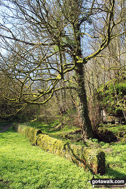At the Middleton-by-Youlgreave end of Bradford Dale