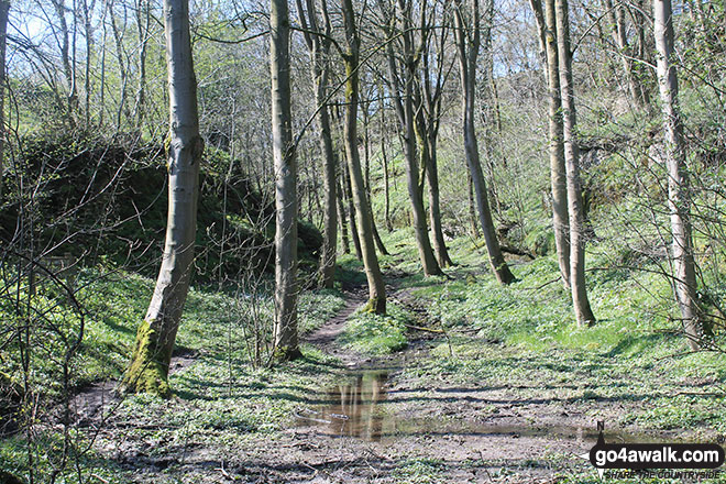 Rusden Wood south of Middleton-by-Youlgreave