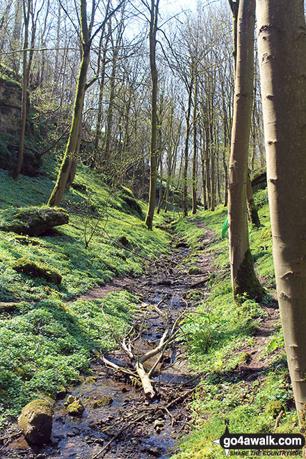 In Rusden Wood south of Middleton-by-Youlgreave
