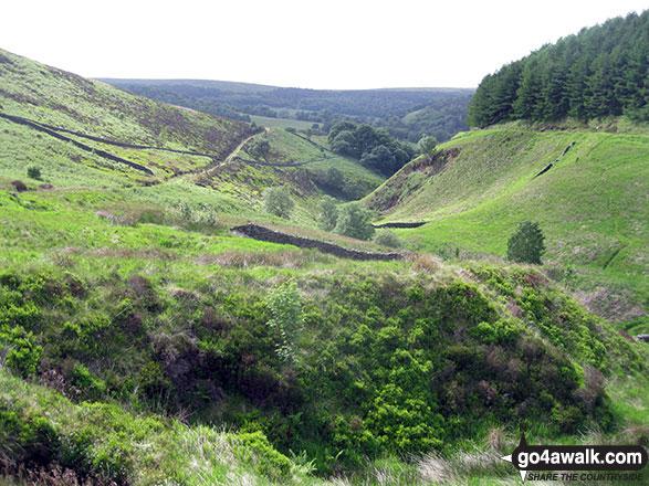 Wild Moor