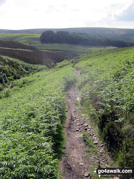 Goyt's Clough from the path across Goyt's Moss