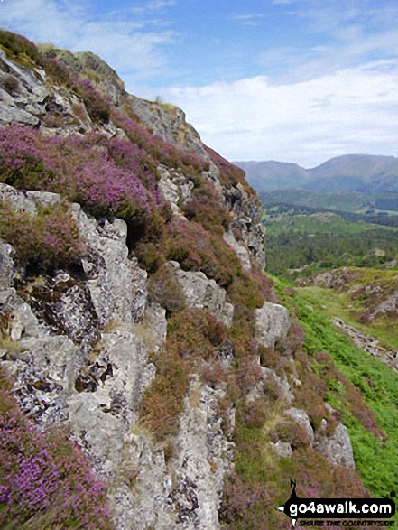Heather and crags on Holme Fell