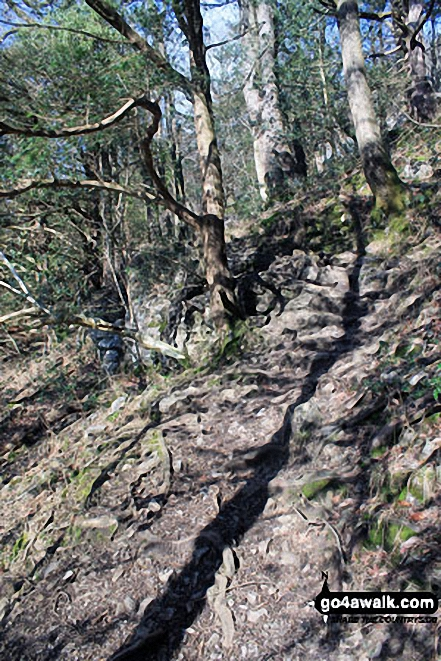 Path up through Black Yews Scar from Witherslack Hall School to Lord's Seat (Whitbarrow Scar)