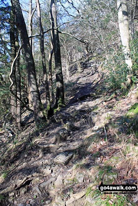Path up through Black Yews Scar from Witherslack Hall School to Lord