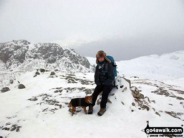 Walk c108 Crinkle Crags from The Old Dungeon Ghyll, Great Langdale - My dog Rosie and I on Crinkle Crags