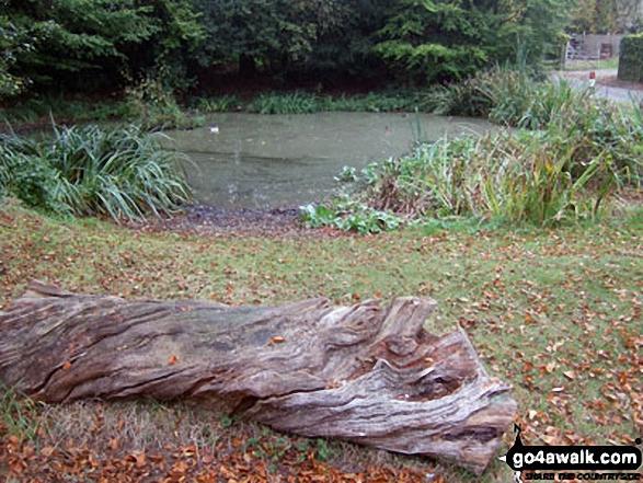 Dunsmore Village Pond