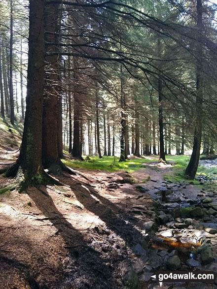 Birchin Clough woods
