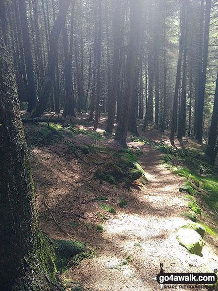 Woodland near Birchin Clough