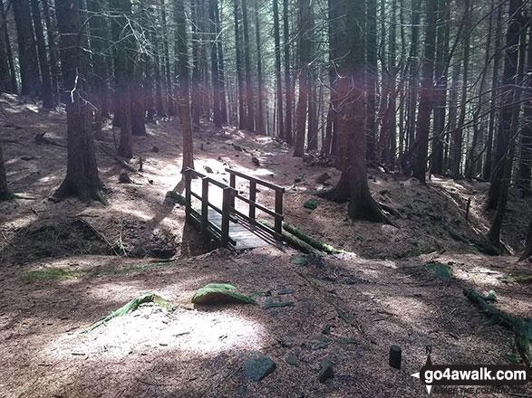 Footbridge on Lady Clough Woods