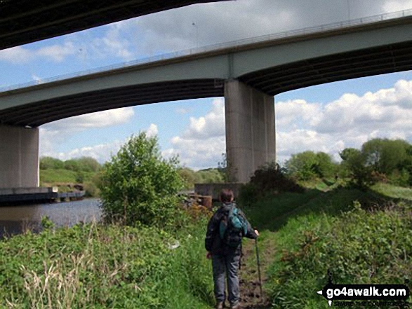 Walking under Thelwall Viaduct which carries the M6 (and much traffic) over The Manchester Ship Canal