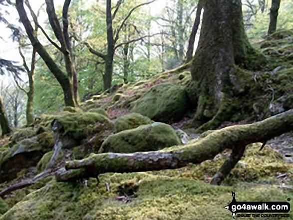 Minffordd Path to Cadair Idris