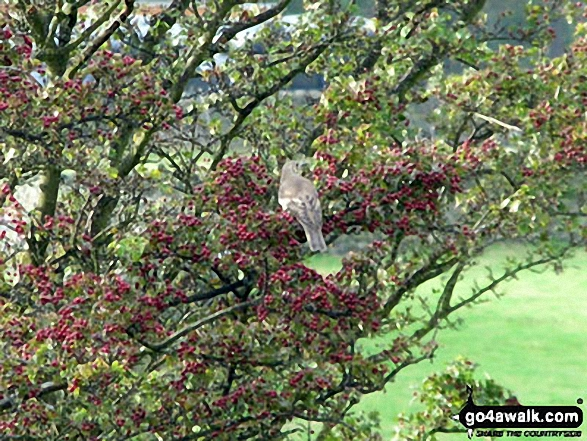 A bird in a tree on Fremington Edge