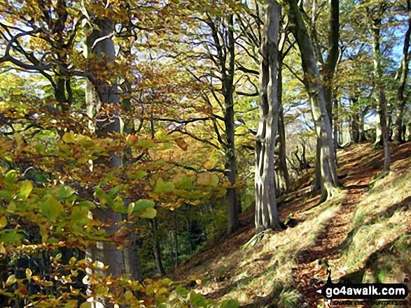 Woodland above Mill Gill near Askrigg