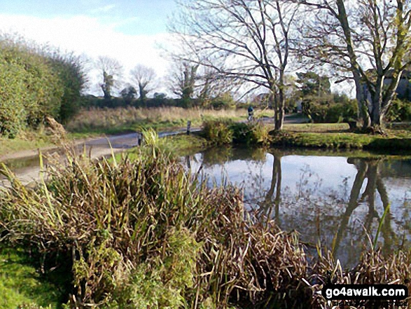 Pond at Low Road, East Somerton