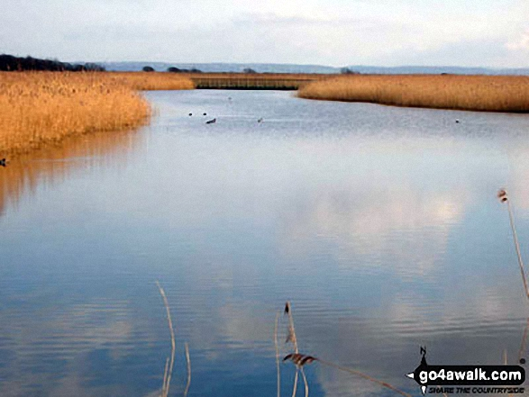 Ducks on the Newport Wetlands Reserve, Uskmouth, Newport
