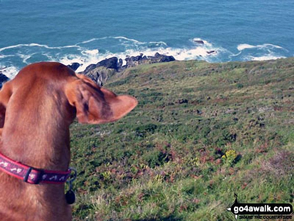 The view from Rame Head down to the sea
