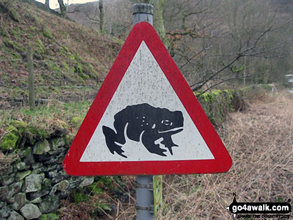 Look out! Giant toads! Sign near Bowden Bridge Car Park, Hayfield