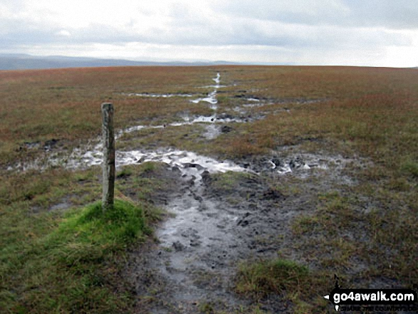Summit post on a wet and boggy Westend Moss