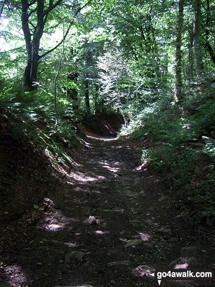 Sunken path near Great Hucklow