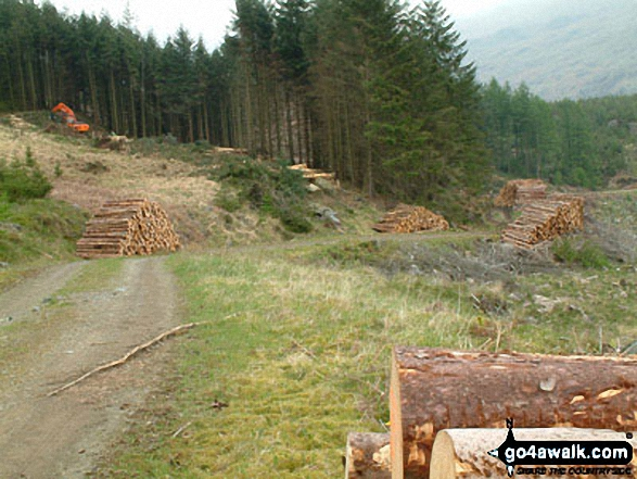 Forestry Works on Harter Fell (Eskdale)