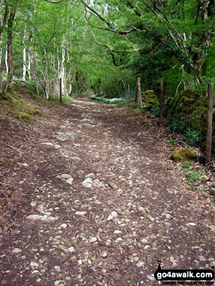 The West Mendip Way through Long Wood Nature Reserve. Walk route map so110 Beacon Batch from Cheddar Gorge photo