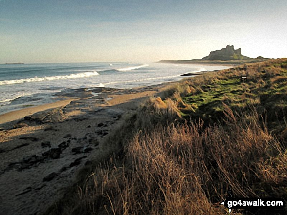 Walk Picture/View: Bamburgh Castle from The Wynding in Northumberland, England by Steve Clements (1)