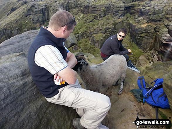 Getting mugged by sheep at Kinder Downfall
