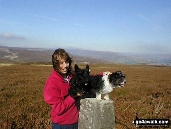 Sean, Rosie and Bess in Swaledale near Reeth. Walk route map ny157 High Harker Hill and Greets Hill from Reeth photo