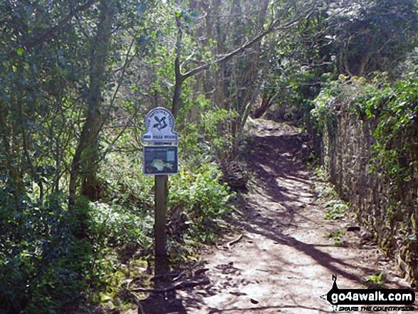 Path through Red Hills Wood, Arnside Knott
