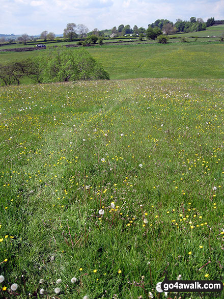 Lovely summer meadows near Hulme End