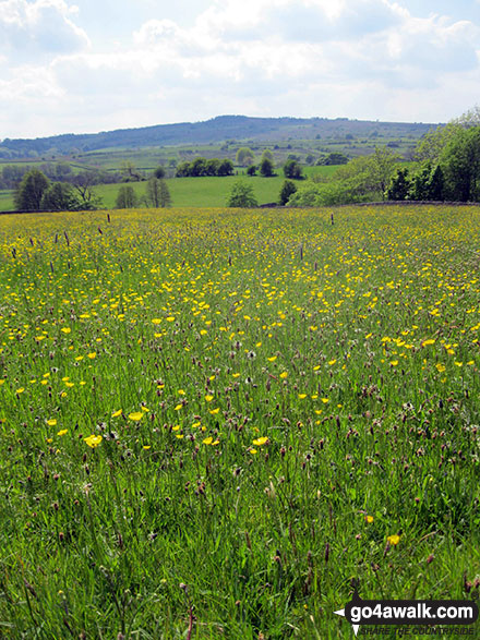 Summer Staffordshire meadows near Warslow Hall