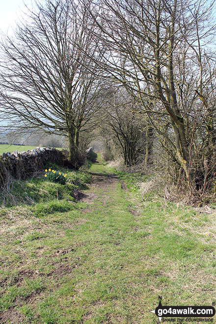 The path along Madge Dale