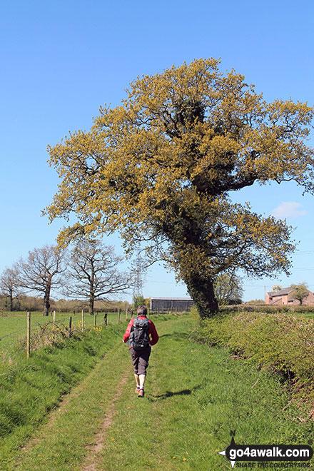 Footpath near Wathall Farm