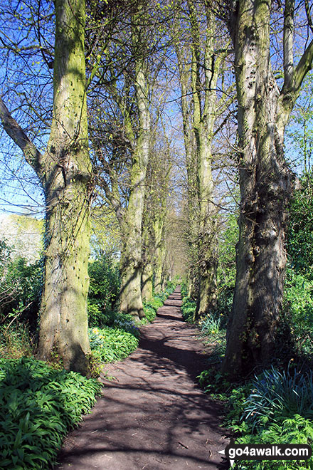 The woodland path out of Great Budworth
