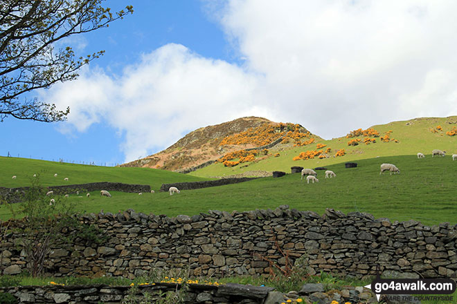 Reston Scar from Staveley