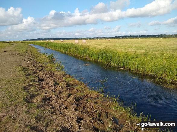 Thorpe and Haddiscoe Fleet, Haddiscoe Marshes