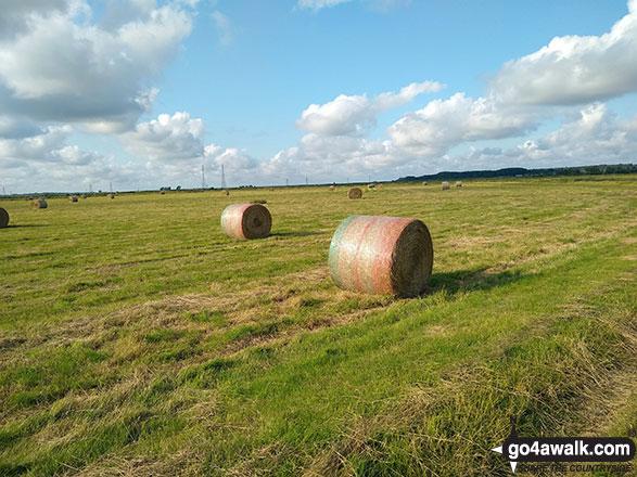 Cylindrical Hay Bales on Thorpe Marshes