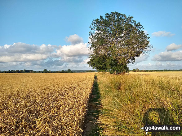The field path between Lower Thurlton and Haddiscoe