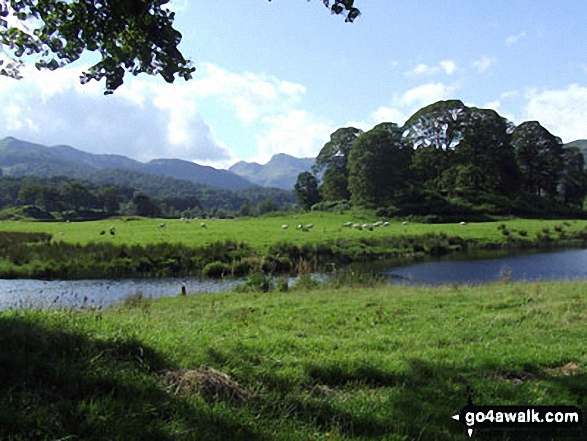 On The Cumbria Way near Elterwater with The Langdale Pikes in the distance. Walk route map c165 Little Langdale from Elterwater photo