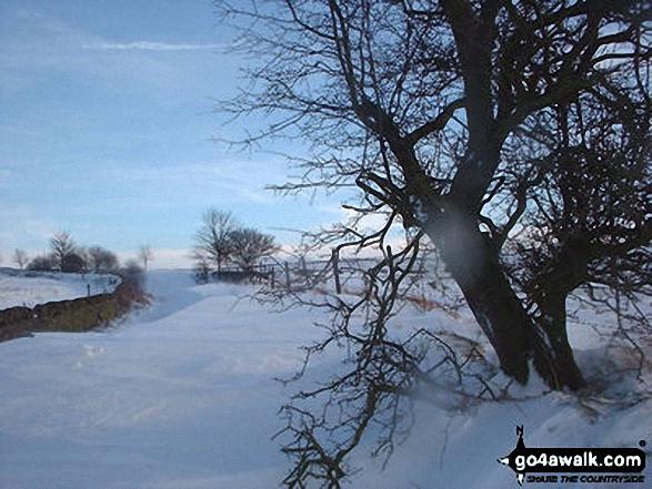 Apple Tree Road - Blocked!