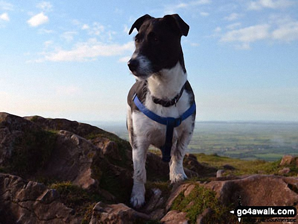 My dog Duke on Beacon Batch. Walk route map so110 Beacon Batch from Cheddar Gorge photo
