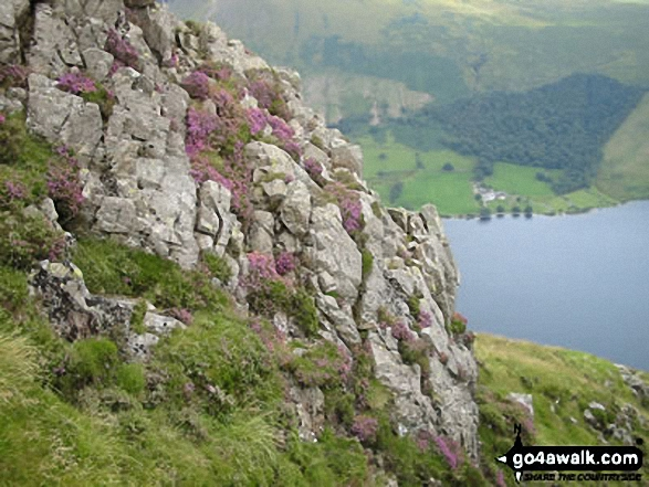 Blooming Heather on Yewbarrow with Wast Water below. Walk route map c101 Pillar and Little Scoat Fell from Wasdale Head, Wast Water photo