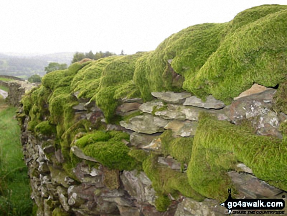 Moss covered wall in Robin Lane nr Troutbeck